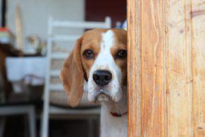 Hondenuitlaatservice Mariela